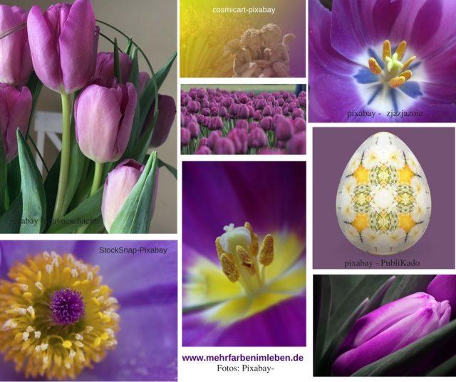 Violett Und Gelb U2013 Ideale Farbkombination Für Den Ruhigen Raum U2013 Yoga  Und  Meditationsraum Oder Schlafzimmer.