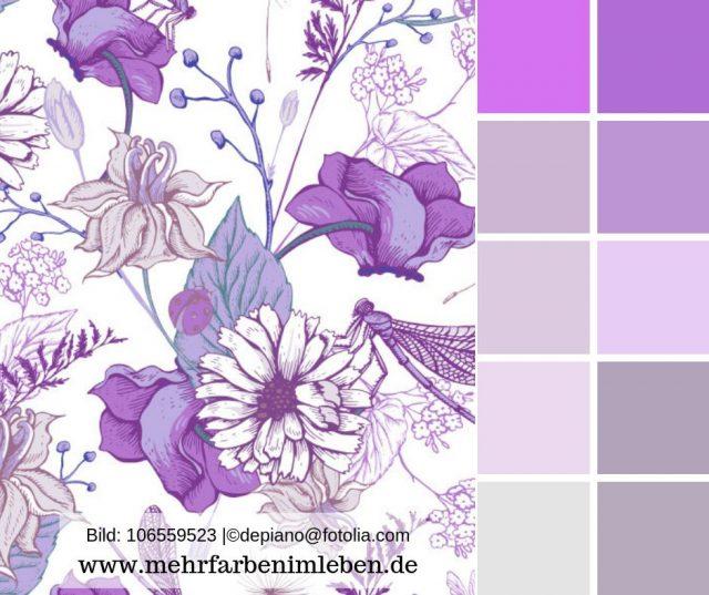 Flieder, Helles Violett, Wirkt Als Wandfarbe Und In Der