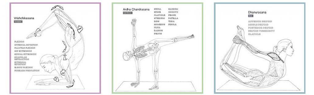Yoga Anatomy Durch Farben Leicht Lernen Mehr Farben Im Leben