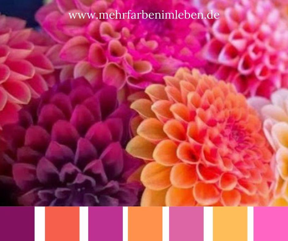 Farben kombineren Orange und Violett