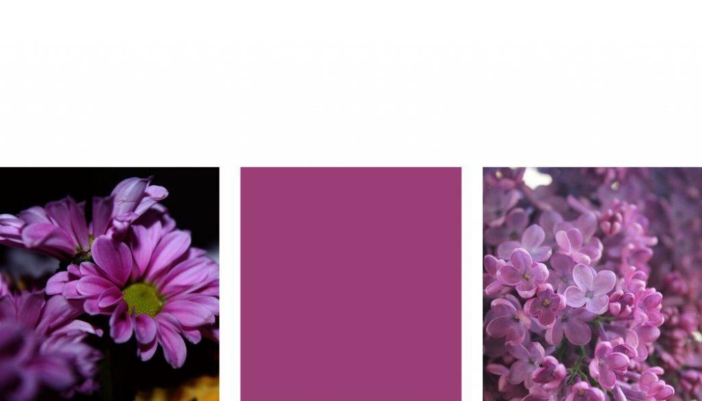 Farben kombinieren Violett