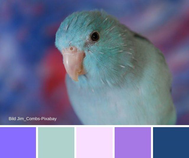 Violett kombiniert mit Blau