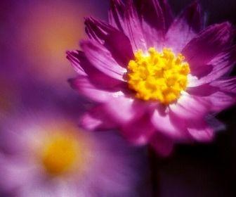 Farben kombineren violett und gelb